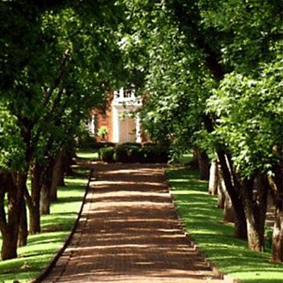 Tree-avenue-rural-driveway