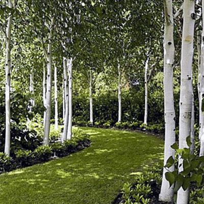 Tree-grove-avenue-rural-landscape-design