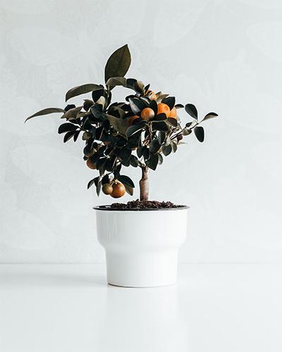 Plant-trends-sydney-landscape-architect