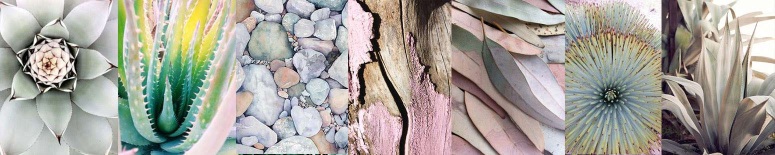 drought-landscape-architect